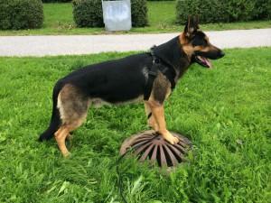 Dogparkour - Kommissarien på brunn