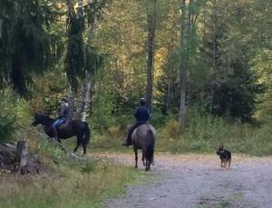 Hästar, tanter och en schäfer