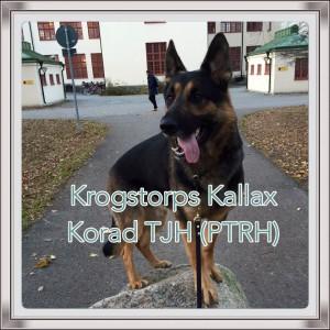 Korad tjh (ptrh) Krogstorps Kallax